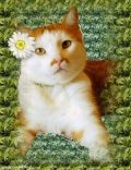 Petit à petit, les chats deviennent l'âme de la maison